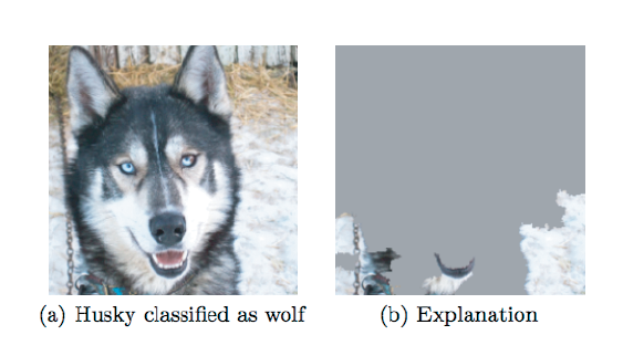 FIGURE 2.8 An explanation or interpretation of a model can reveal major problems, such as in this image classifier, which was trained to distinguish between wolves and Husky dogs but is using the snow in the background to tell the difference. Figure and example from the LIME paper.